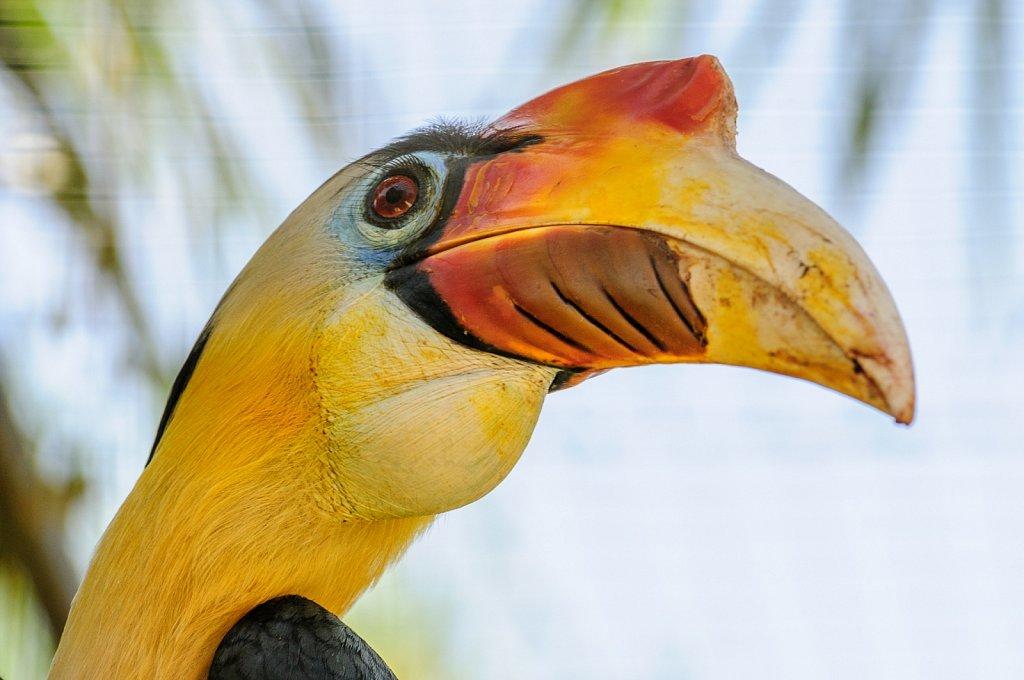 Toucan